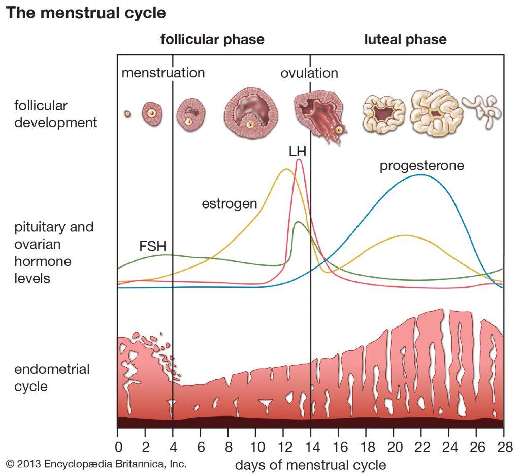 The Link Between TBI and Hormones 1